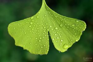 苏轼:大雨过后,抬头看天