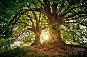 人生,站成一棵树