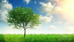 送你一棵小树