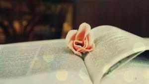 沈从文:读书,是门槛最低的高贵