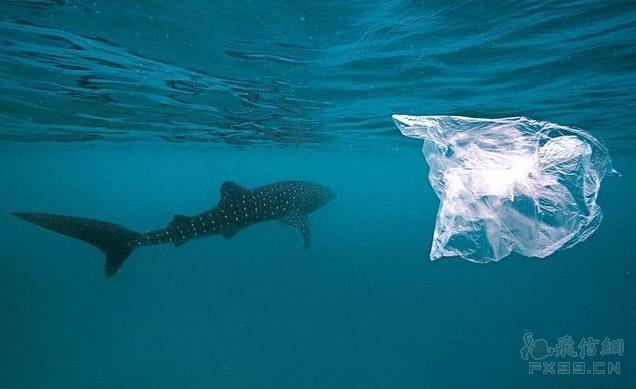 人生就像攒塑料袋,不知道哪天会派上用场