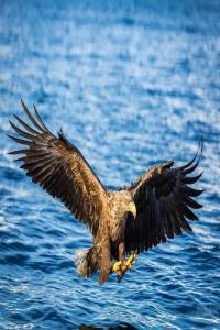 高尔基:鹰之歌