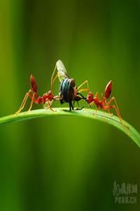 """惊人的""""懒蚂蚁效应"""":为什么有的人越努力,越平庸?"""