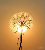 内心积极向上,生活才会光芒万丈